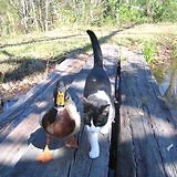 Walk & Talk. Duck & Cat